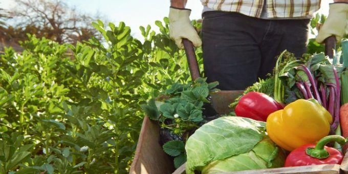 Cursos agrícolas online gratis